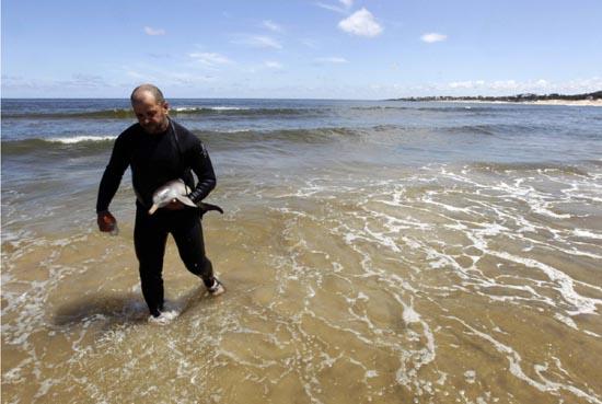 Η διάσωση ενός ορφανού νεαρού δελφινιού (6)