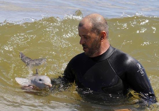 Η διάσωση ενός ορφανού νεαρού δελφινιού (7)