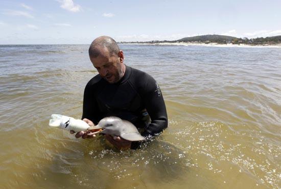 Η διάσωση ενός ορφανού νεαρού δελφινιού (8)
