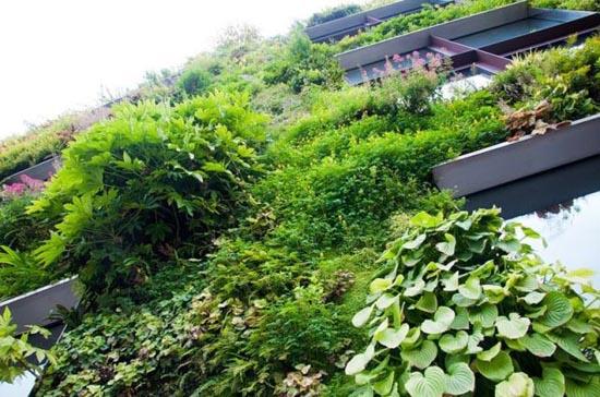 Εντυπωσιακοί κάθετοι κήποι (10)