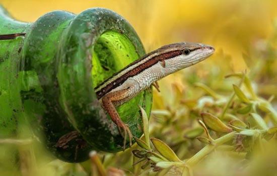 Φωτογραφίες ζώων που δεν βλέπουμε κάθε μέρα (2)