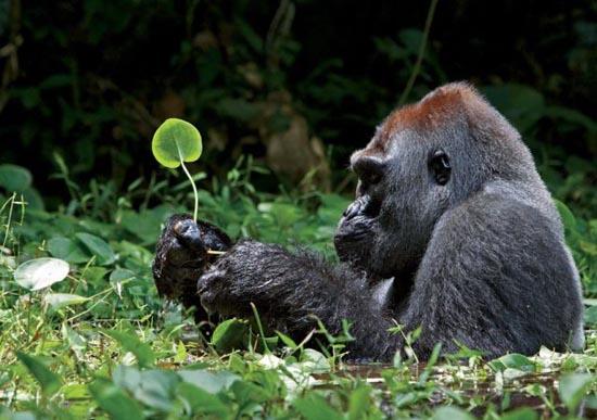 Φωτογραφίες ζώων που δεν βλέπουμε κάθε μέρα (4)