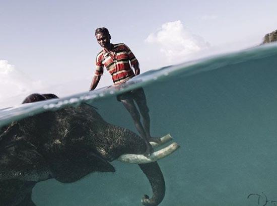 Φωτογραφίες ζώων που δεν βλέπουμε κάθε μέρα (8)