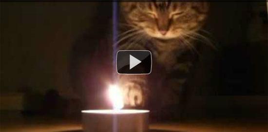 Γάτα... πυρομανής!