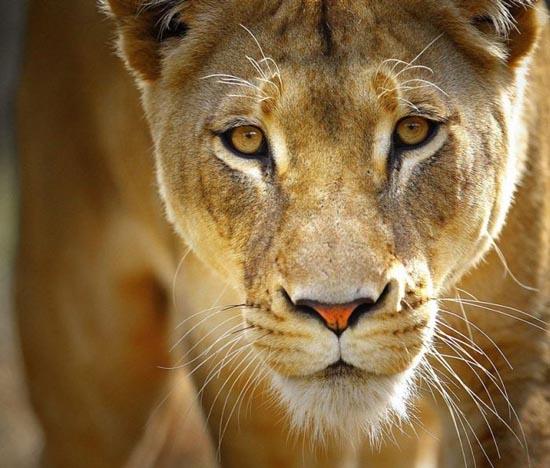 Υπέροχες φωτογραφίες ζώων (1)