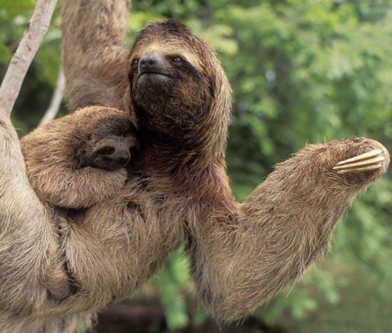 Υπέροχες φωτογραφίες ζώων (3)