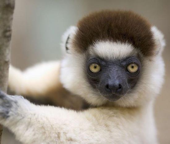 Υπέροχες φωτογραφίες ζώων (6)