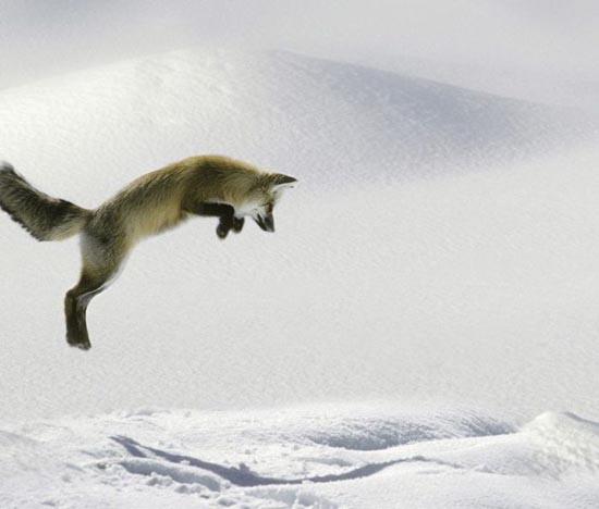 Υπέροχες φωτογραφίες ζώων (7)