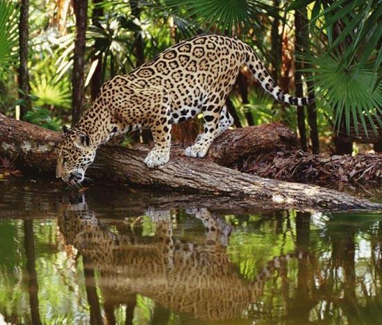 Υπέροχες φωτογραφίες ζώων (14)