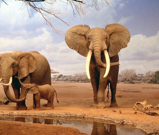 Υπέροχες φωτογραφίες ζώων (17)