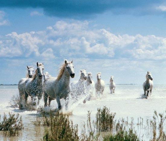 Υπέροχες φωτογραφίες ζώων (18)