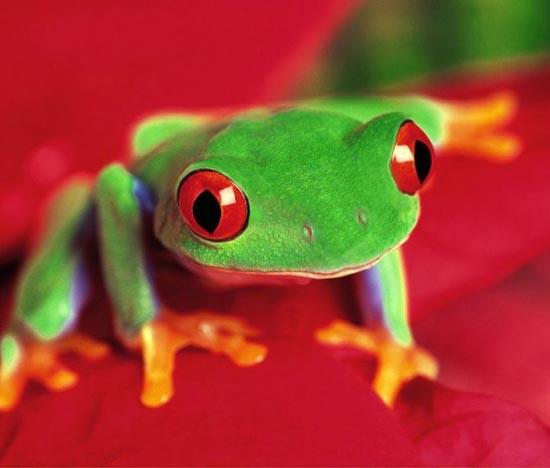 Υπέροχες φωτογραφίες ζώων (19)