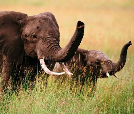Υπέροχες φωτογραφίες ζώων (23)