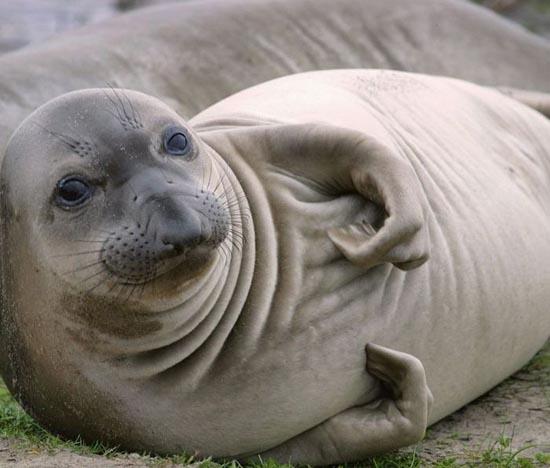 Υπέροχες φωτογραφίες ζώων (25)