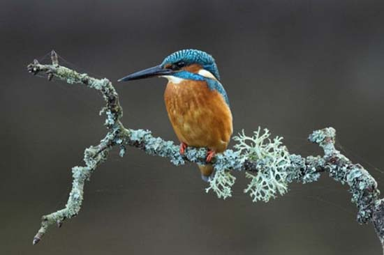 Οι κορυφαίες φωτογραφίες άγριας φύσης