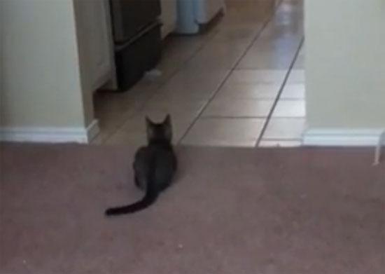 Μυστήριο: Η γάτα και το μαγικό δάχτυλο