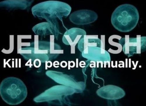Παράξενα πράγματα που μας σκοτώνουν κάθε χρόνο (8)