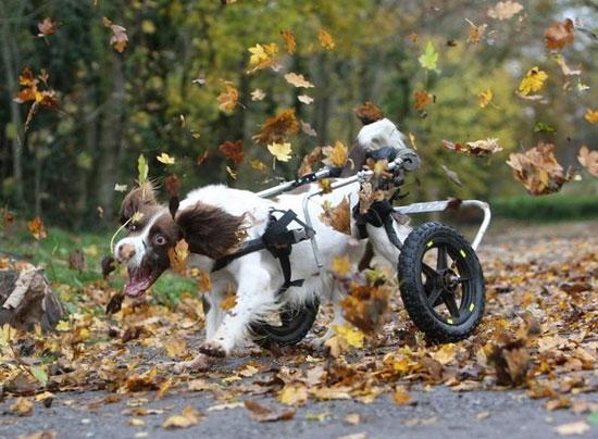 Φωτογραφία της ημέρας: Ο απόμαχος σκύλος