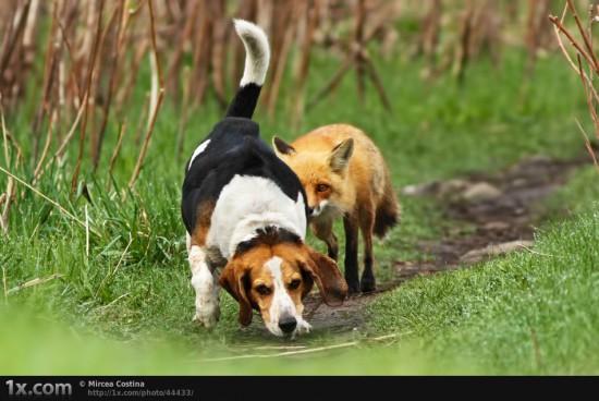 Φωτογραφία της ημέρας: Το χειρότερο κυνηγόσκυλο στον κόσμο