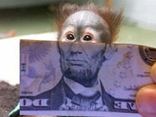 Φωτογραφία της ημέρας: Χαρτονόμισμα μαϊμού
