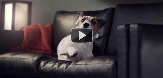 Σκύλοι σε αργή κίνηση