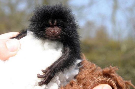 Τα πιο χαριτωμένα μωρά ζώων (2)