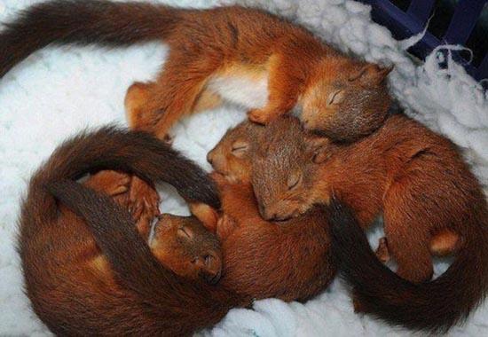 Τα πιο χαριτωμένα μωρά ζώων (8)