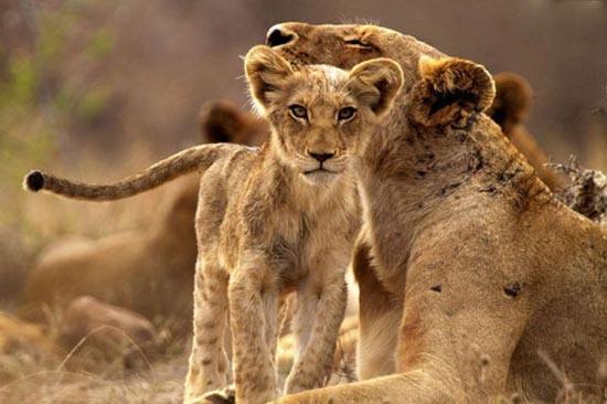 Τα πιο χαριτωμένα μωρά ζώων (12)