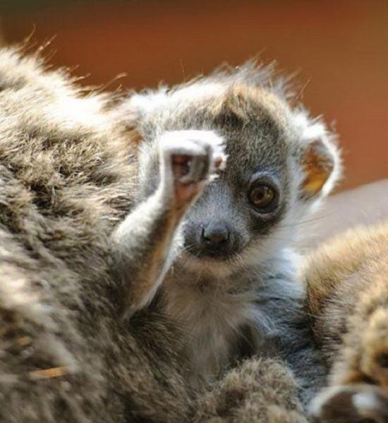 Τα πιο χαριτωμένα μωρά ζώων (13)