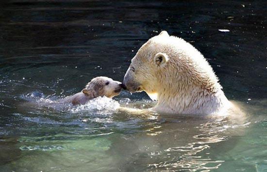 Τα πιο χαριτωμένα μωρά ζώων (15)