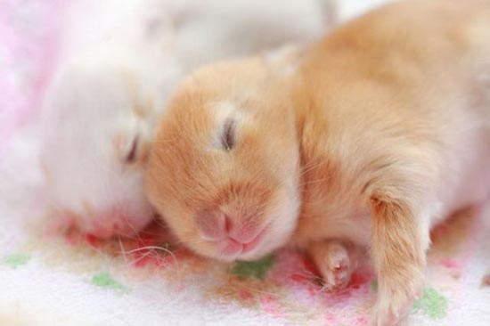Τα πιο χαριτωμένα μωρά ζώων (16)