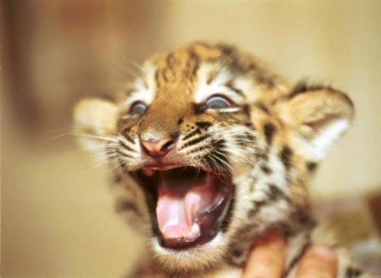 Τα πιο χαριτωμένα μωρά ζώων (18)
