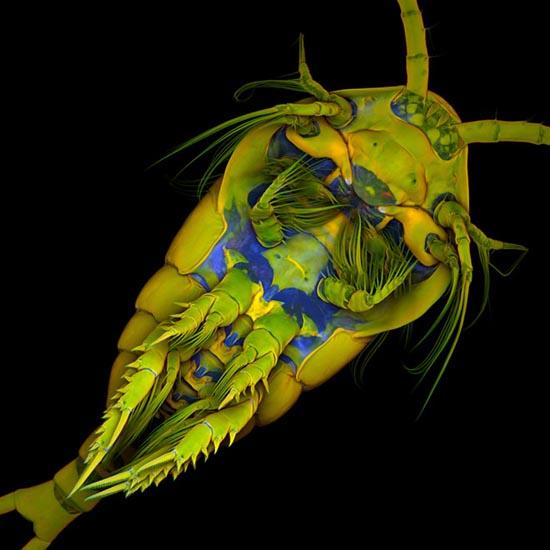 Οι 20 καλύτερες φωτογραφίες της χρονιάς από μικροσκόπιο (9)