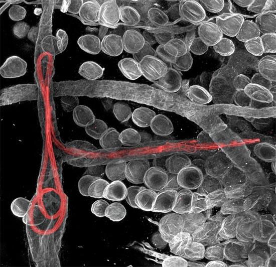 Οι 20 καλύτερες φωτογραφίες της χρονιάς από μικροσκόπιο (17)