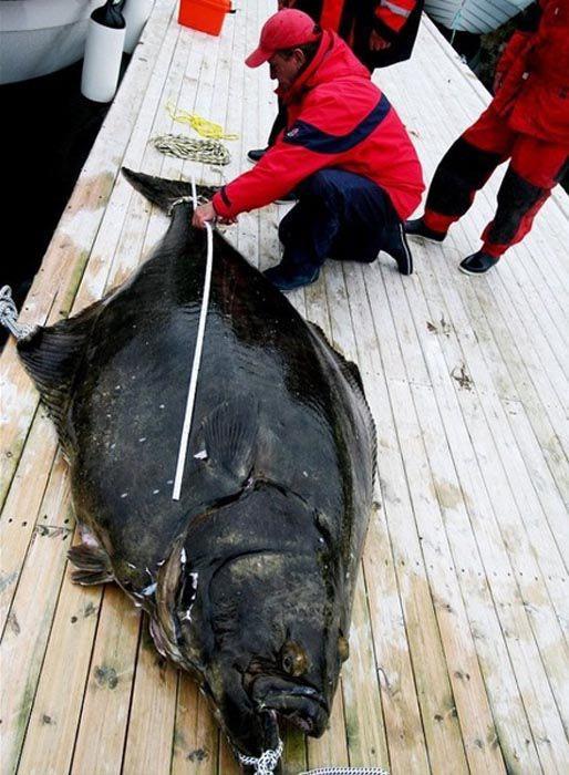 Τυχερή ψαριά για παγκόσμιο ρεκόρ (3)