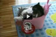 Χοντρή γάτα βλέπει TV στην πολυθρόνα της
