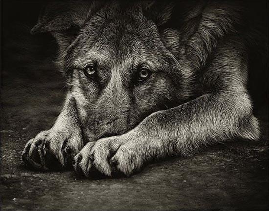 Ζωγραφιές ζώων που μοιάζουν αληθινές (2)
