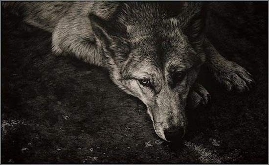 Ζωγραφιές ζώων που μοιάζουν αληθινές (5)
