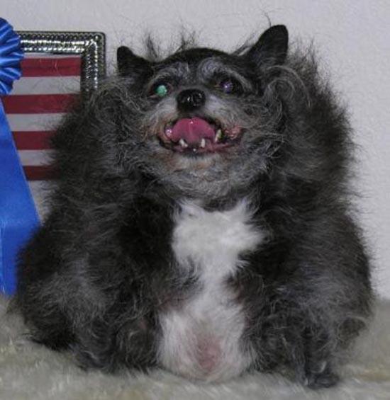 Τα 20 πιο άσχημα σκυλιά όλων των εποχών (1)