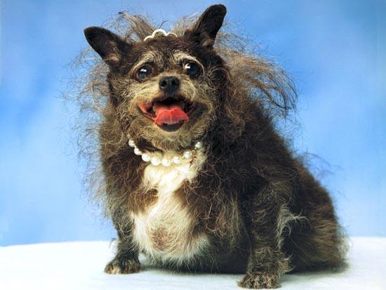 Τα 20 πιο άσχημα σκυλιά όλων των εποχών (3)