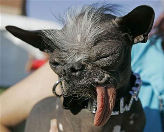 Τα 20 πιο άσχημα σκυλιά όλων των εποχών (5)