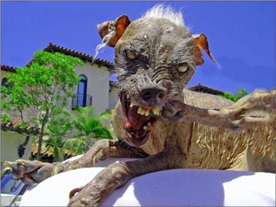 Τα 20 πιο άσχημα σκυλιά όλων των εποχών (17)