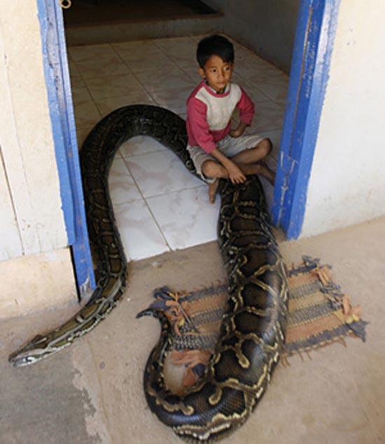 7χρονο αγόρι και πύθωνας 5 μέτρων είναι... κολλητοί! (12)