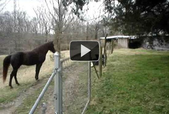 Άλογο και σκύλος παίζουν σαν κολλητοί