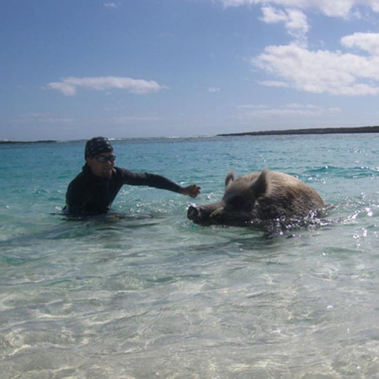 Ασυνήθιστοι τουρίστες στις Μπαχάμες (1)