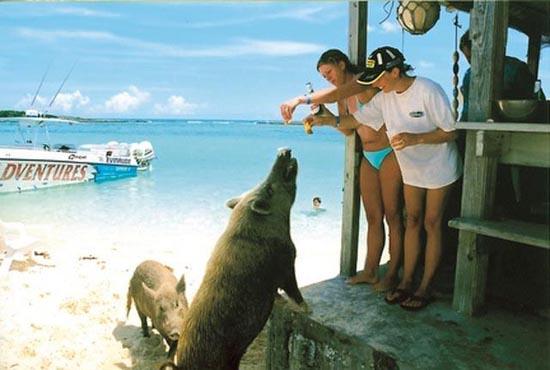 Ασυνήθιστοι τουρίστες στις Μπαχάμες (9)