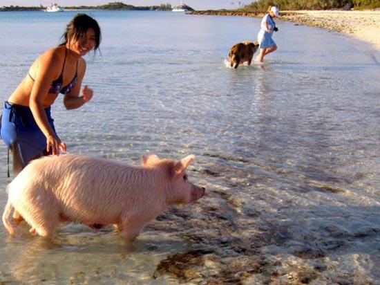 Ασυνήθιστοι τουρίστες στις Μπαχάμες (11)