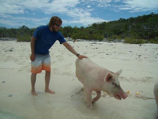 Ασυνήθιστοι τουρίστες στις Μπαχάμες (12)