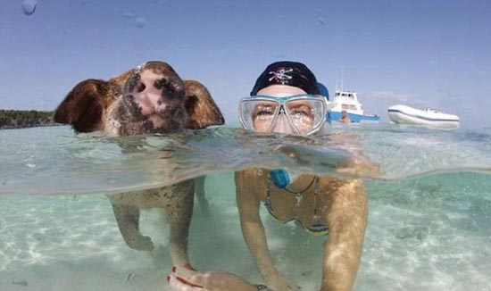 Ασυνήθιστοι τουρίστες στις Μπαχάμες (23)