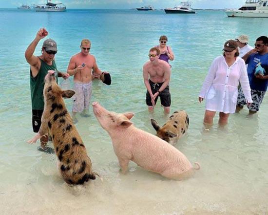 Ασυνήθιστοι τουρίστες στις Μπαχάμες (25)